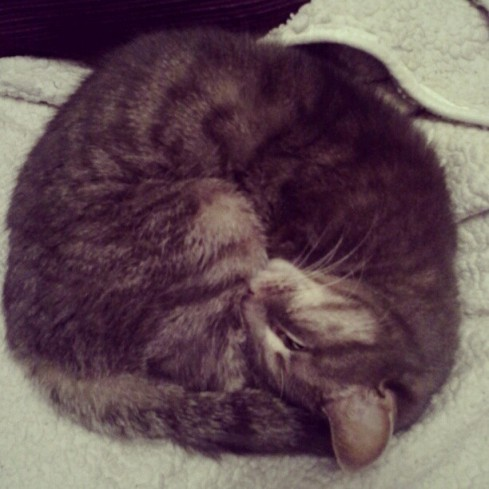 I don't have a sleeping newborn to take photos of, so I take photos of my sleeping Bella cat - Hurray Kimmay