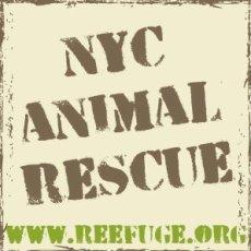 NYC Animal Rescue