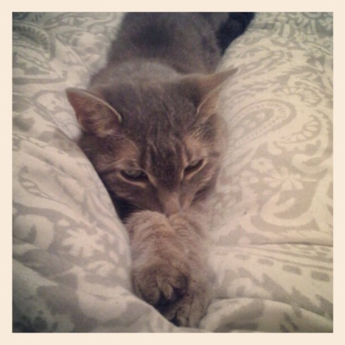 There's nothing wrong with taking photos of your cat snoozing, right? -Hurray Kimmay