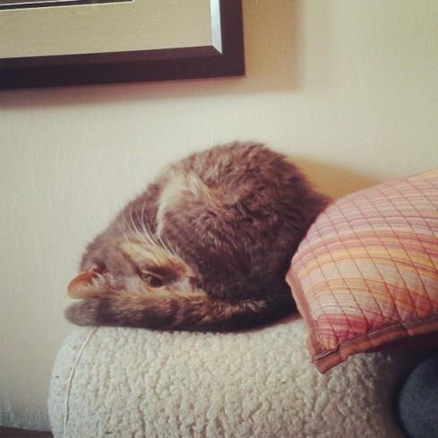 Bella Cat sleeping on Hurray Kimmay
