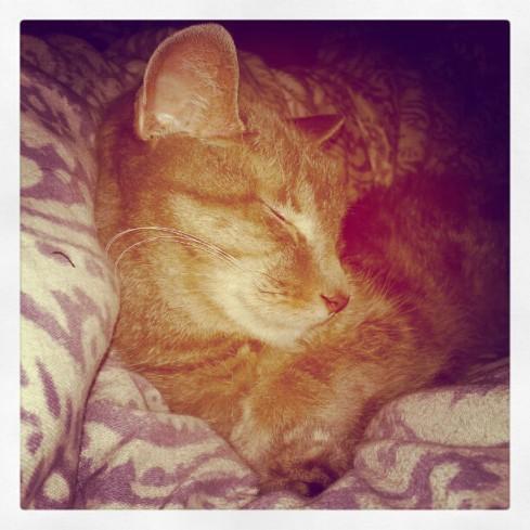 Sleepy Bella cat on Hurray Kimmay