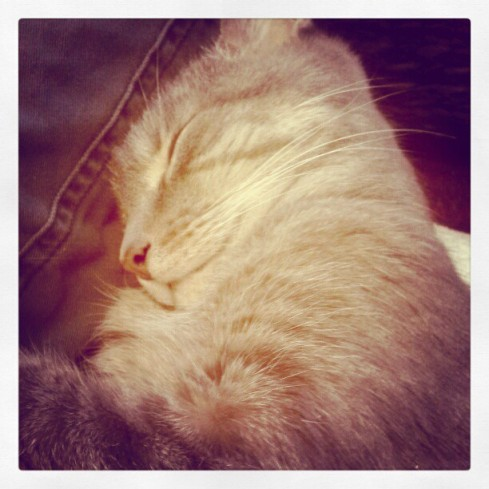 Dogs and cats need doting parents who take instagram photos of them sleeping, too. -Hurray Kimmay