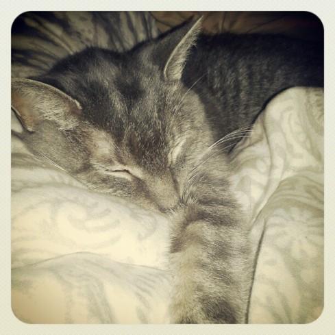 Bella Cat Sleeping on Instagram - Hurray Kimmay